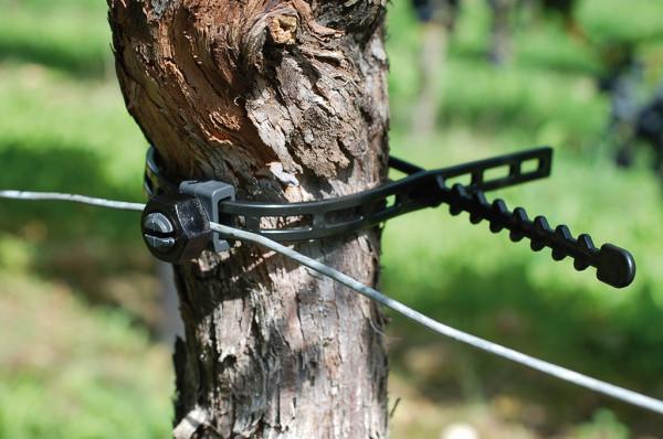 Feststeller mini M12 mit Stammband 420 mm - 100 Stück