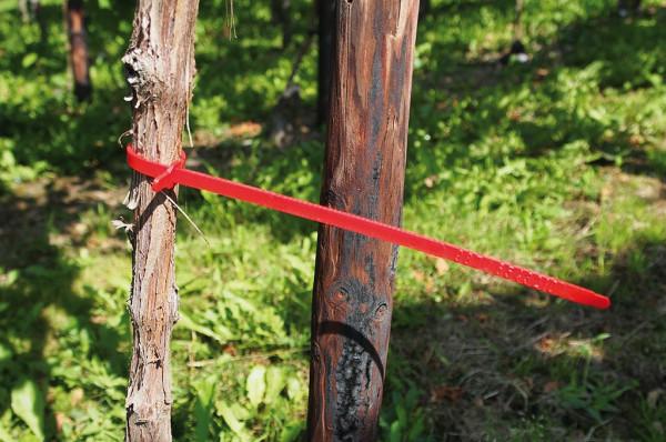 Selektierband 310 mm lang rot - 250 Stück